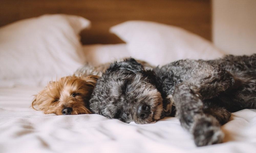 Lenivy pes ako ho motivovat k aktivite